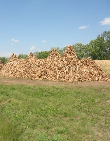 Fresh split firewood!